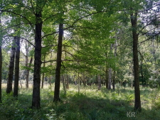 20 acres Three Rivers, Gladwin