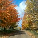 Clare County Country Road Fall